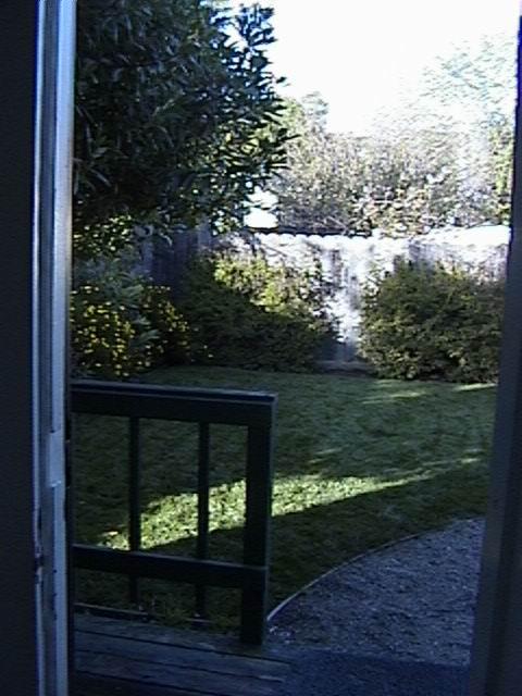 backyard3-02.jpg